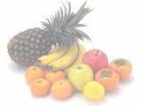 栄養指導・情報